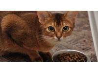 Сухие корма для кошек. Обзоры и рекомендации. Часть 3